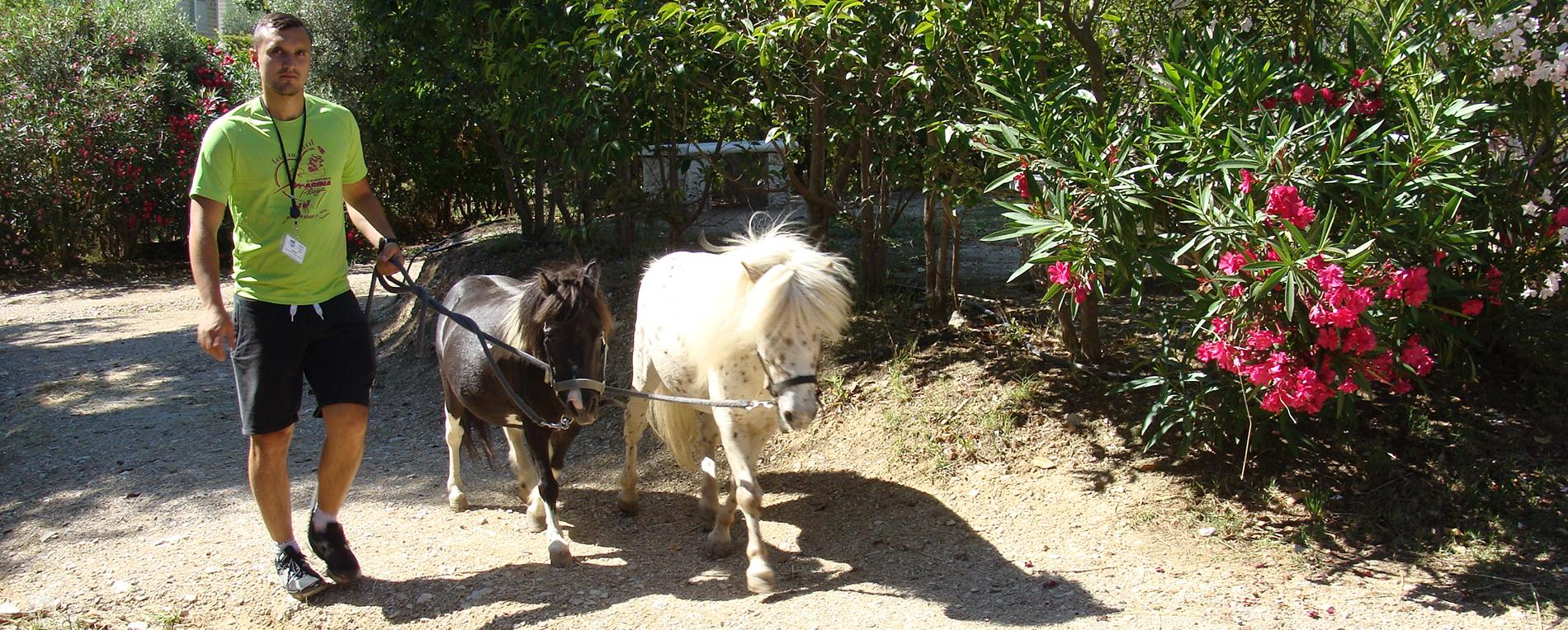 Chevaux mini- Camping Marina Plage