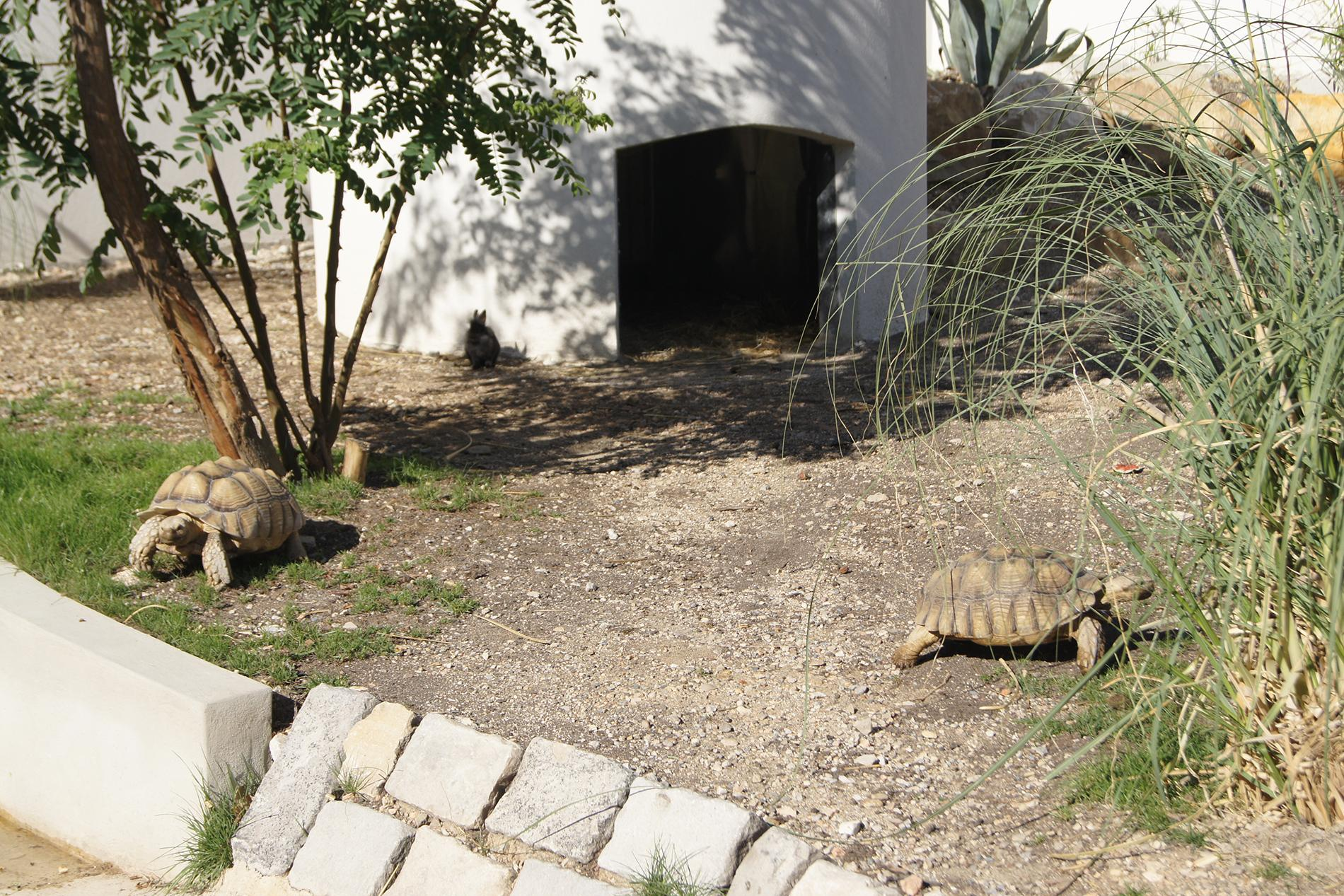 Tortues d'Afrique - Camping Marina Plage